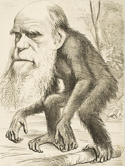 Caricature Darwin monkey